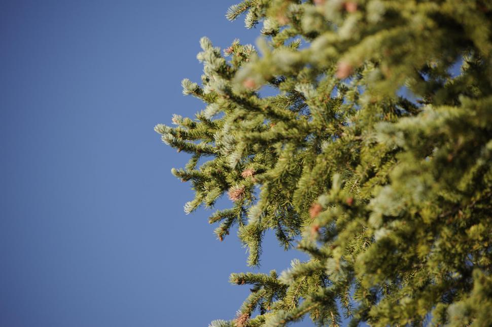 Download Free Stock HD Photo of Close-up of pine needles Online