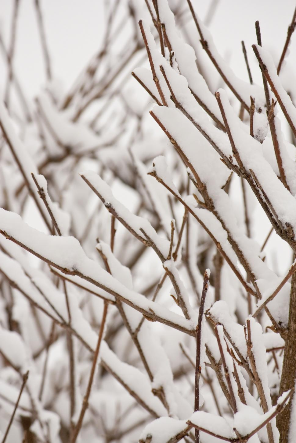 Download Free Stock Photo of Branches