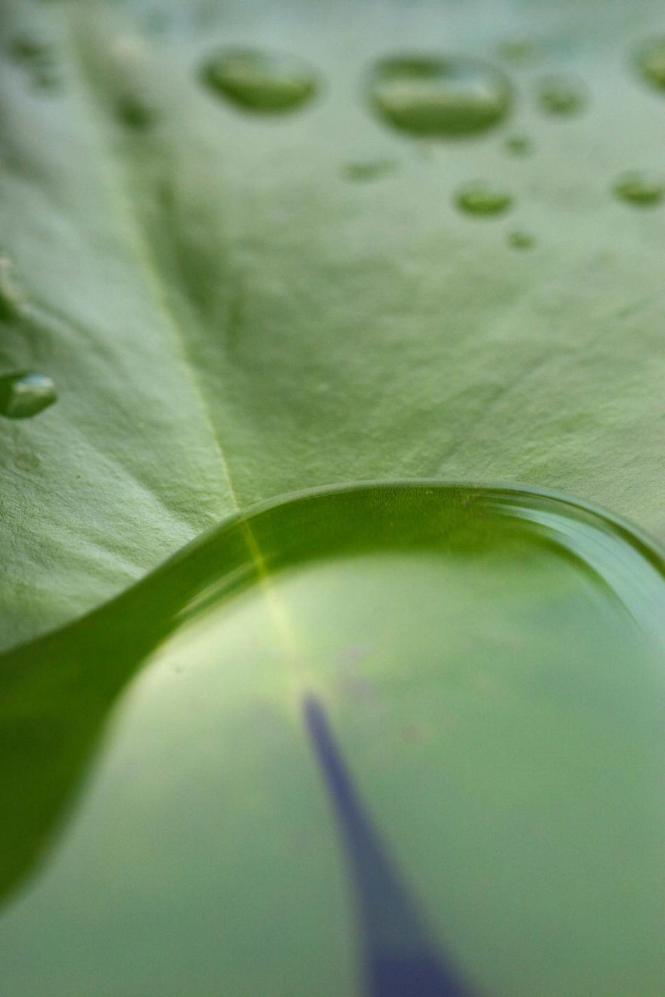 Download Free Stock Photo of Lily pad