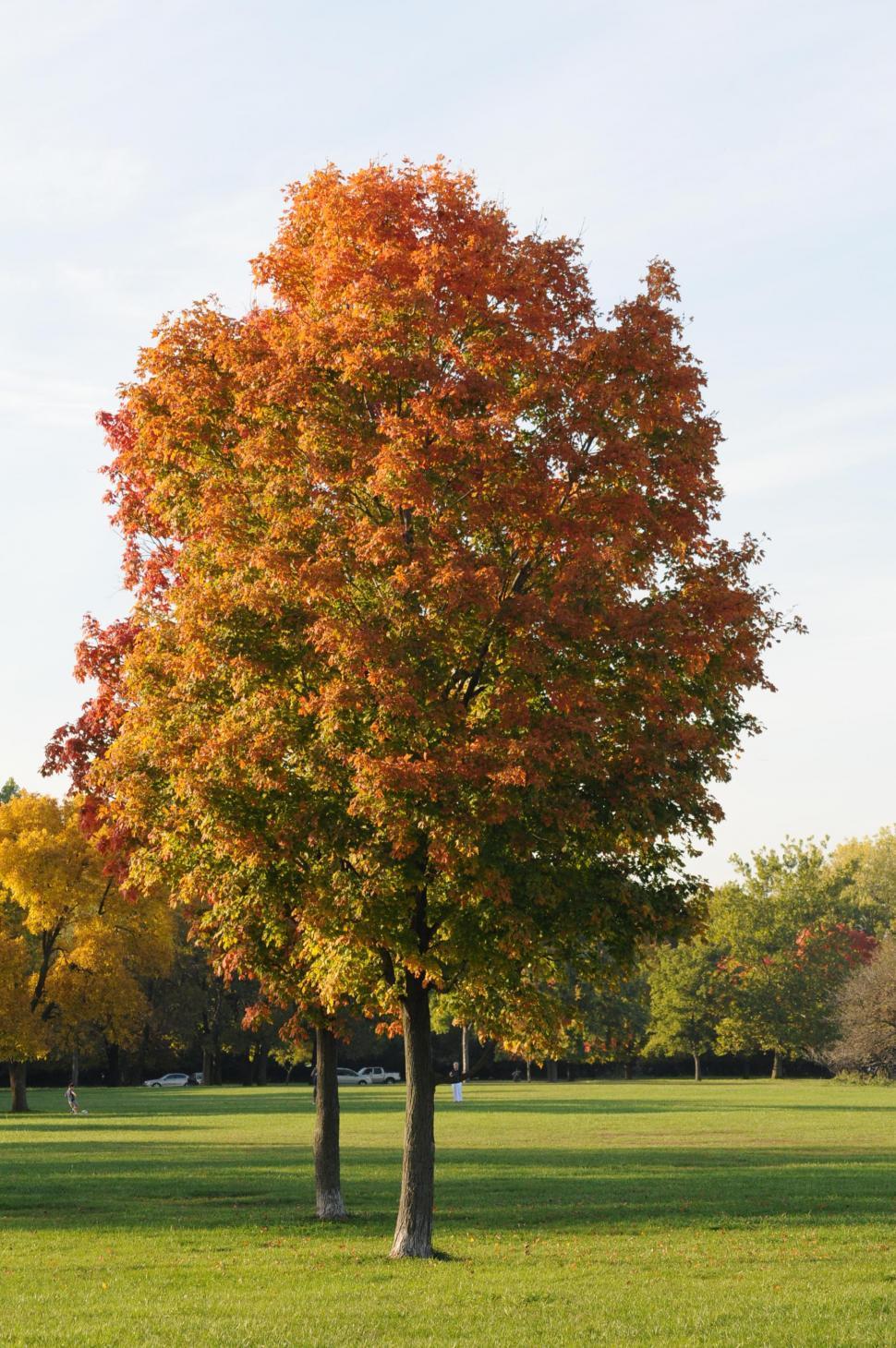 Download Free Stock Photo of Autumn tree