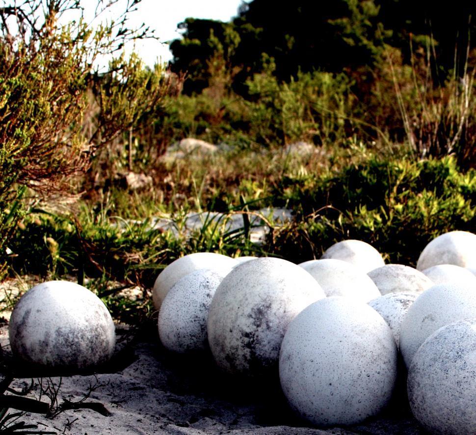 Download Free Stock Photo of Ostrcih Eggs