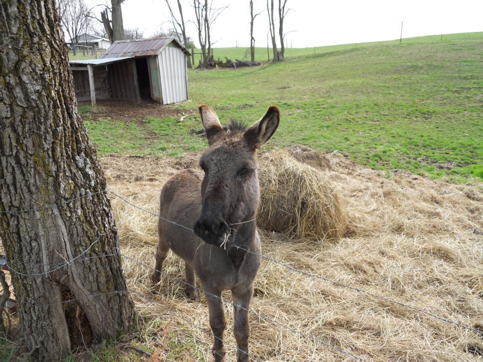 Download Free Stock HD Photo of Donkey Online