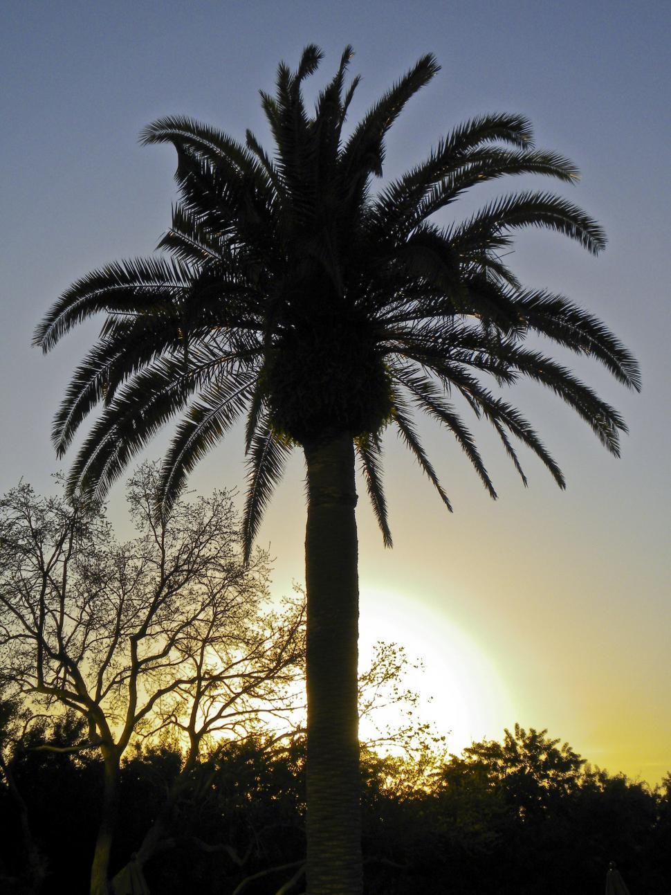 Download Free Stock Photo of Sunset Palm