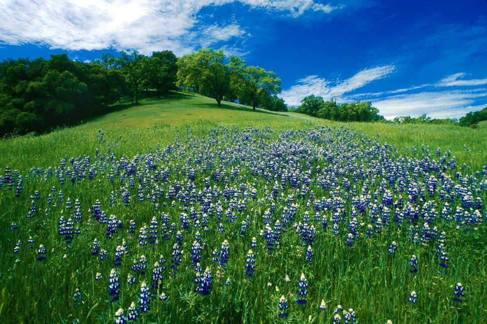 Download Free Stock HD Photo of Rolling hills with blooming lupin Online