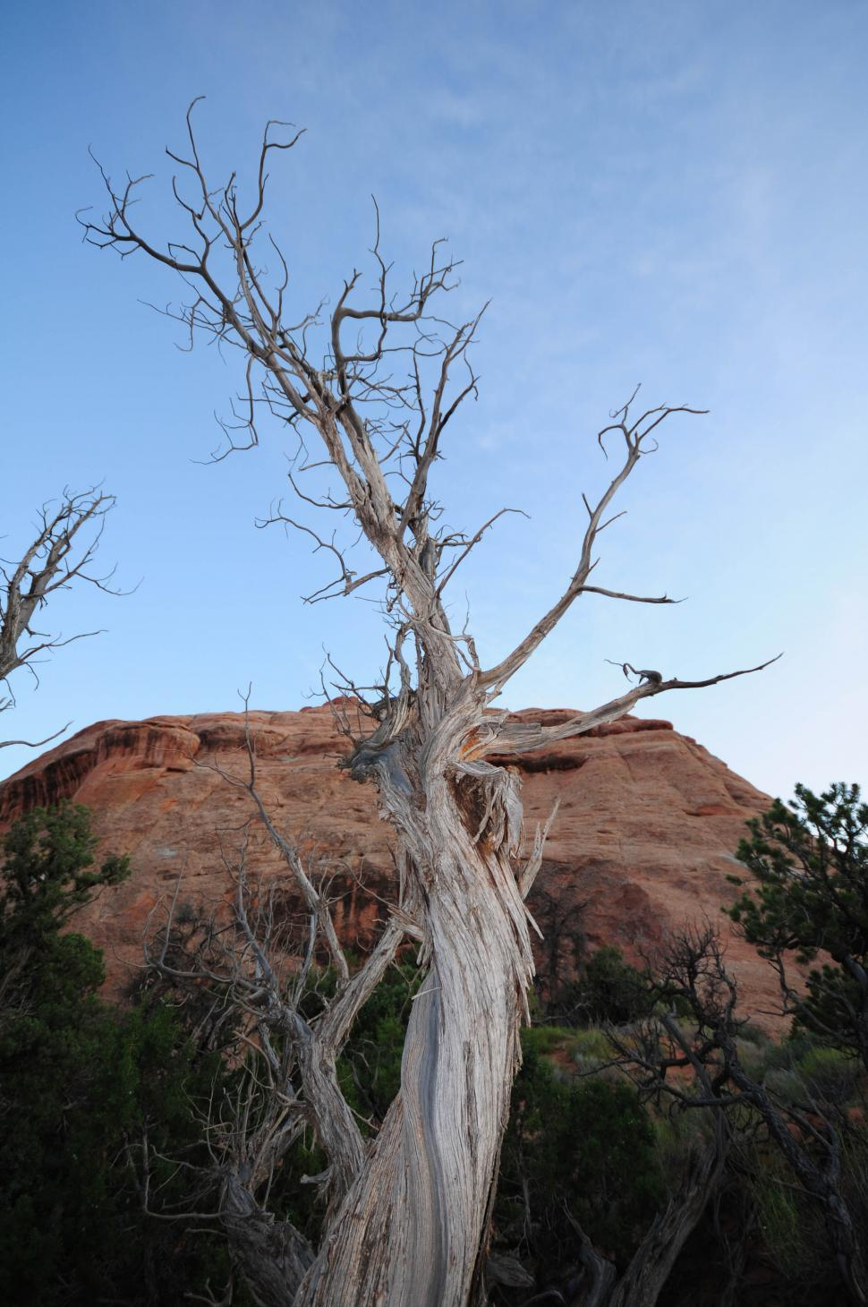 Download Free Stock Photo of Twisted tree