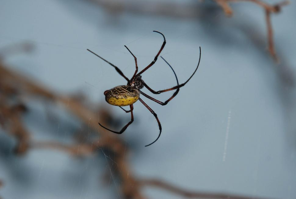 Download Free Stock HD Photo of Spider Online