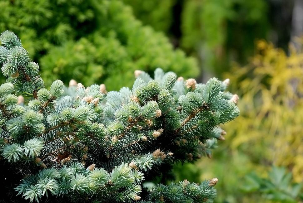 Download Free Stock HD Photo of Evergreen branch Online