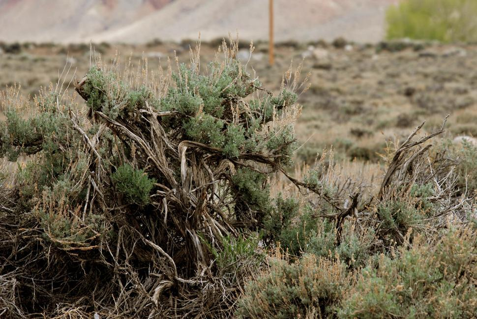 Download Free Stock HD Photo of Dry shrub Online