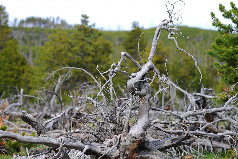 Download Free Stock Photo of Dead tree branches