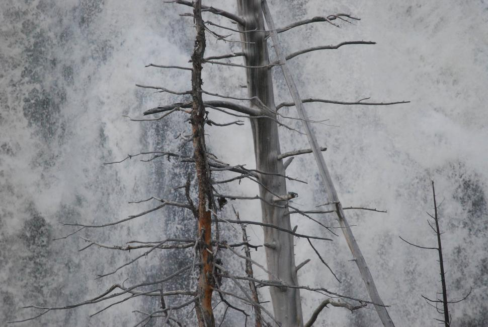 Download Free Stock Photo of Dead tree