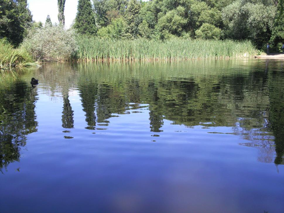 Download Free Stock Photo of Pond