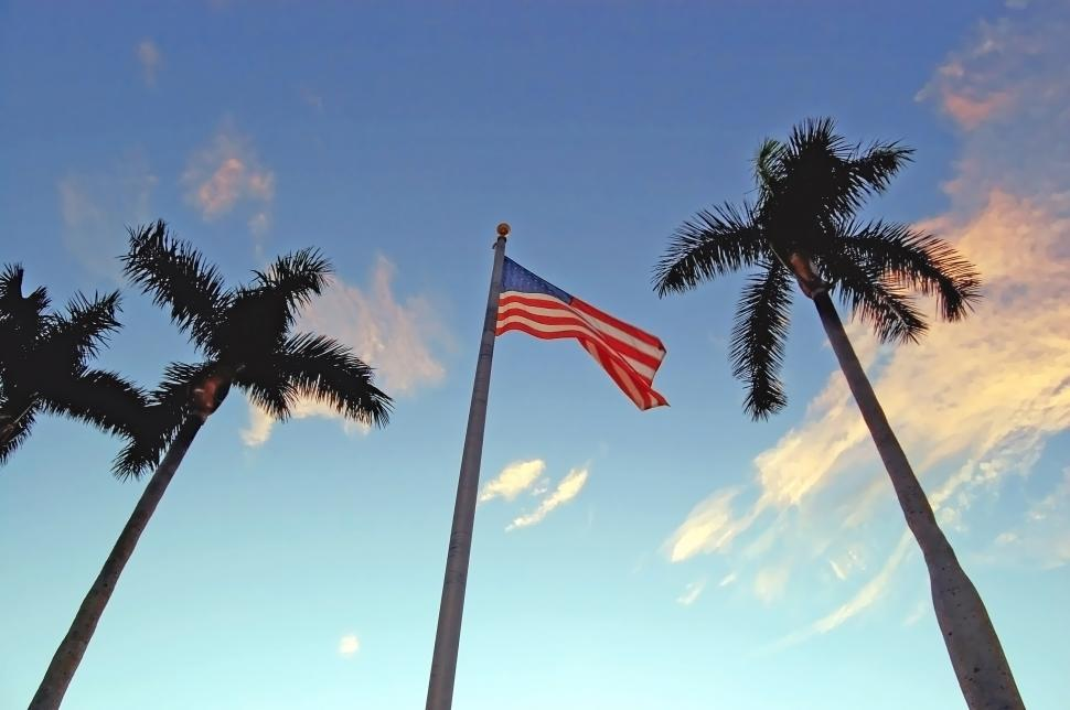 Download Free Stock Photo of Tree palms and flag