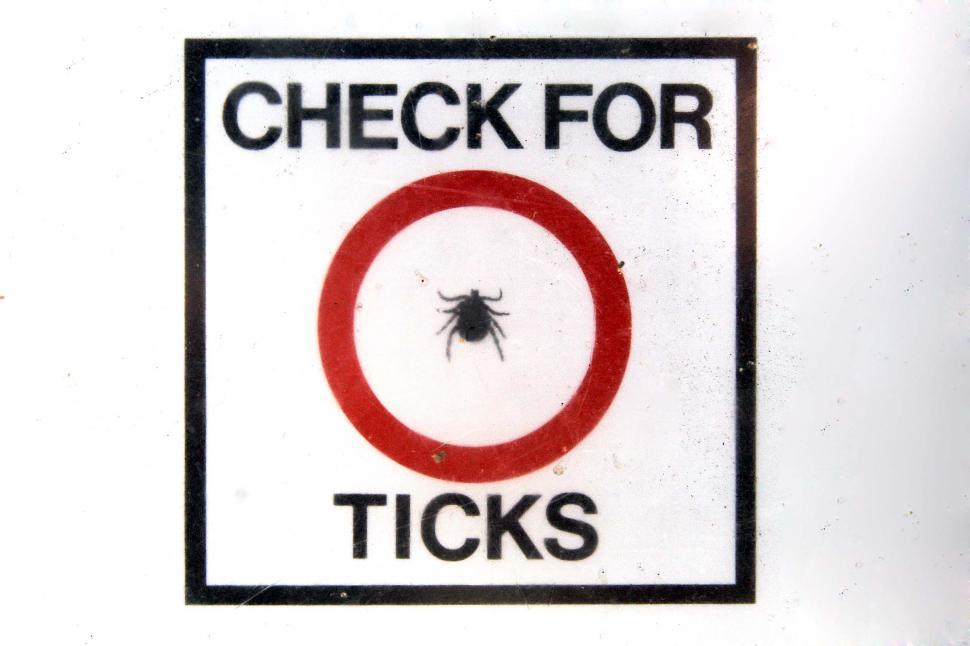 Download Free Stock HD Photo of Check for Ticks Online