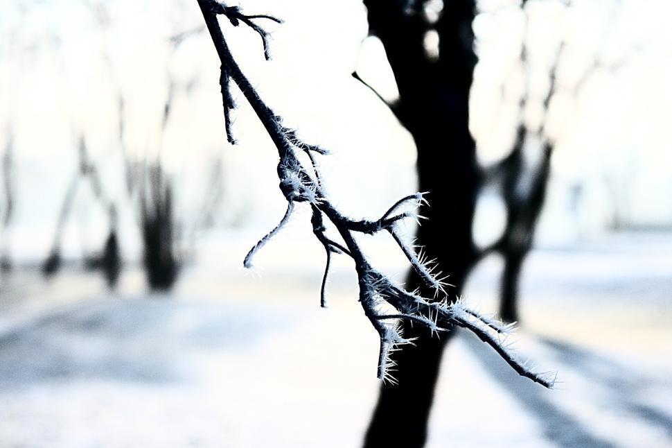 Download Free Stock HD Photo of Frozen tree Online