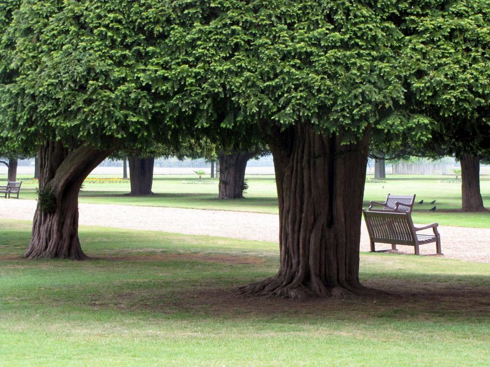 Download Free Stock Photo of Cedar Park