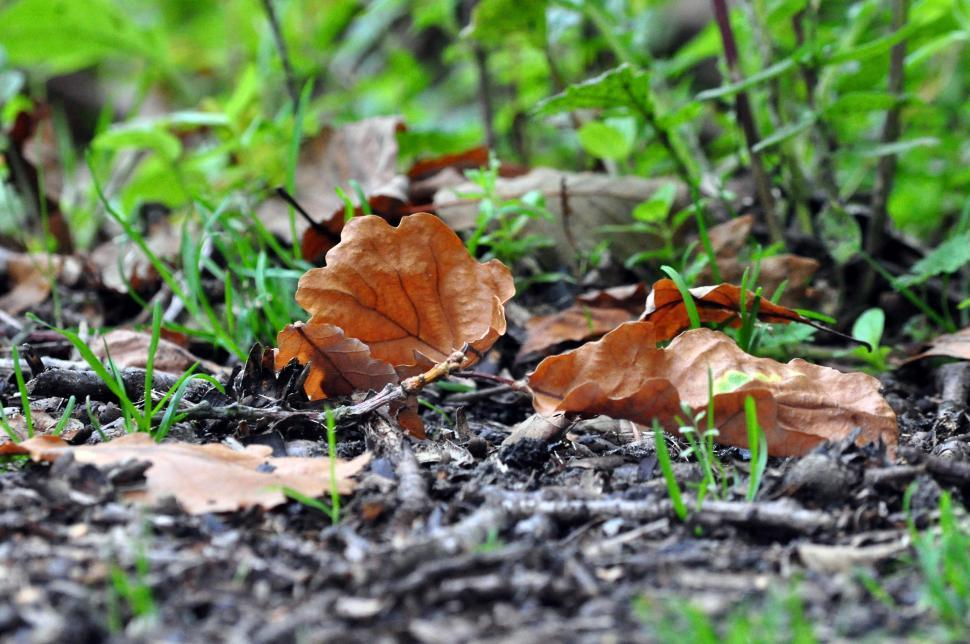 Download Free Stock HD Photo of Perry wood autumn squirrels and leaves Online