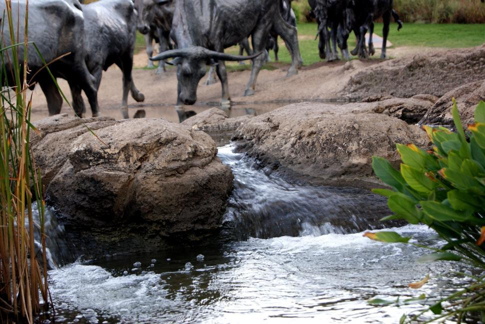Download Free Stock Photo of Bronze statue of a bull drinking from a river