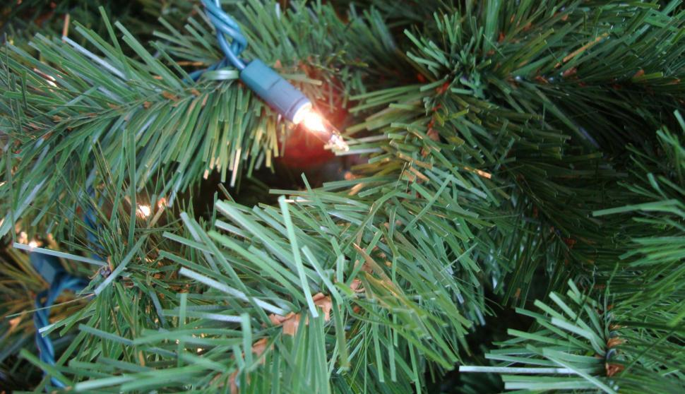 Download Free Stock HD Photo of Christmas tree branch Online