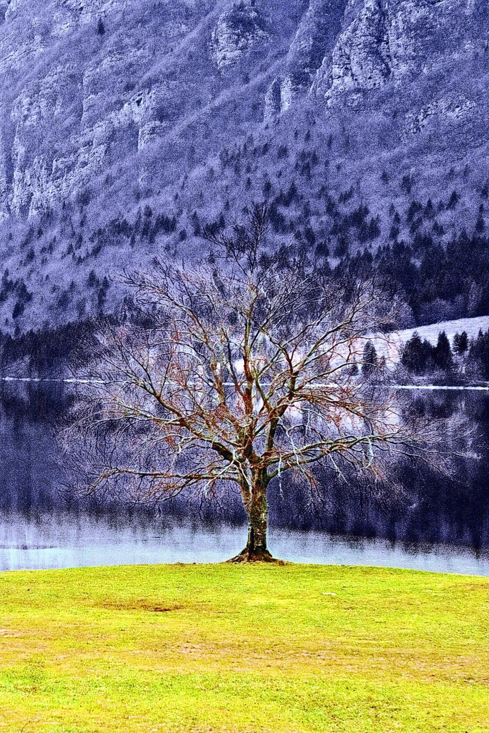 Download Free Stock HD Photo of The tree Online