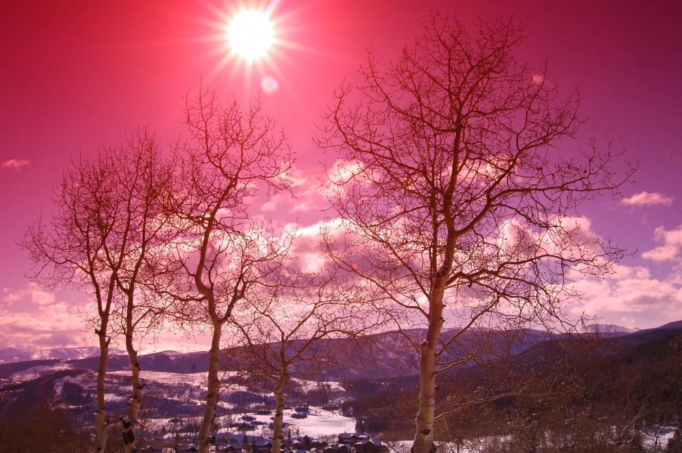 Download Free Stock HD Photo of Colorado Pink Sky Sunset with Aspen Trees Online