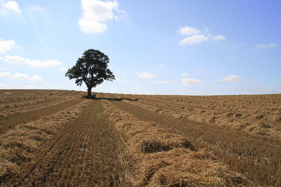 Download Free Stock HD Photo of lone tree Online