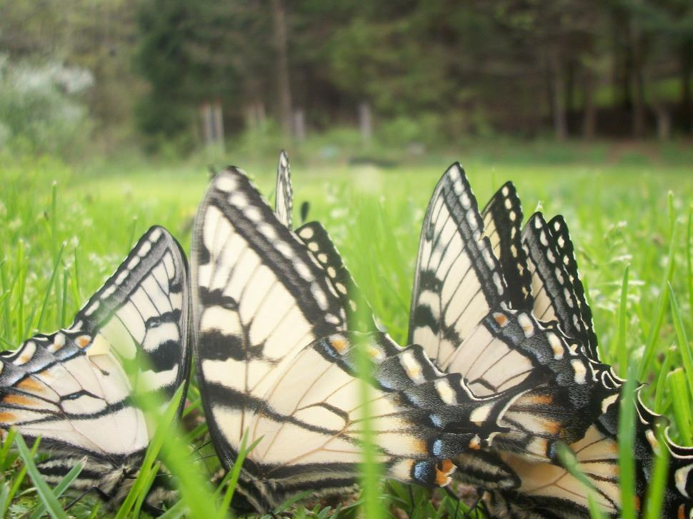 Download Free Stock HD Photo of Butterfly Gathering Online