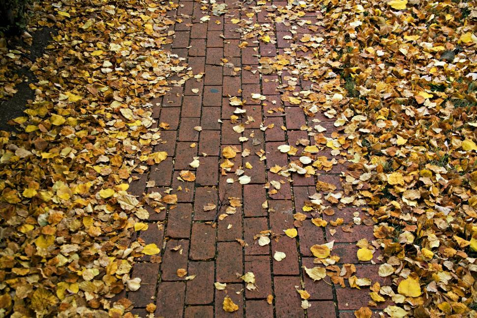 Download Free Stock HD Photo of Pathway Online