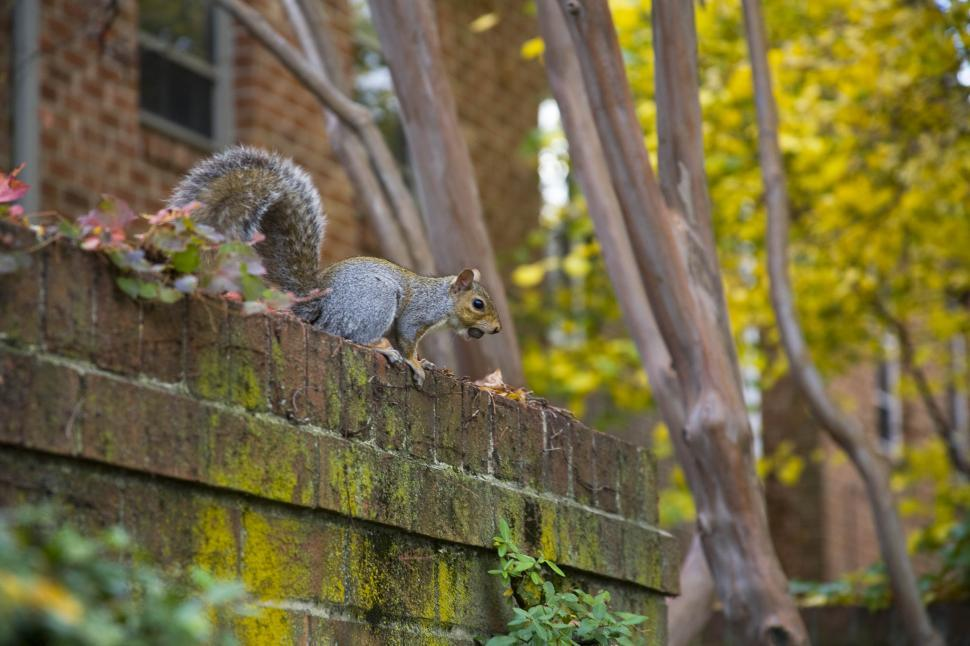 Download Free Stock HD Photo of squirrel  Online