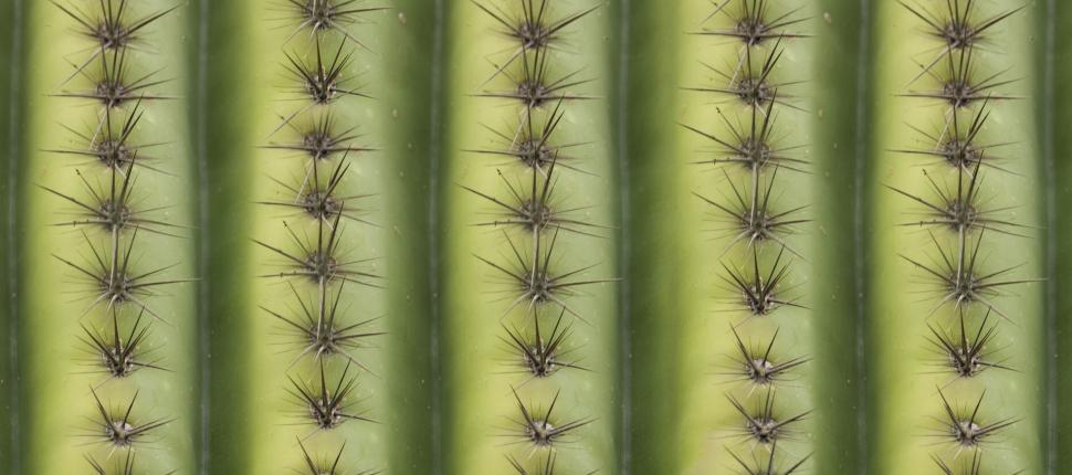 Download Free Stock HD Photo of cactus thorns Online