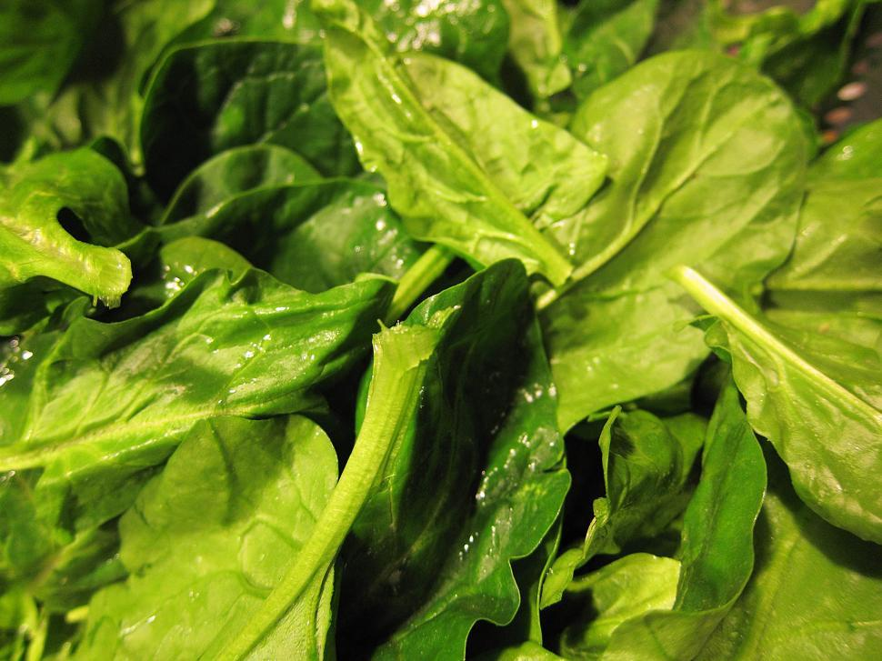 Download Free Stock HD Photo of Leafy spinach Online