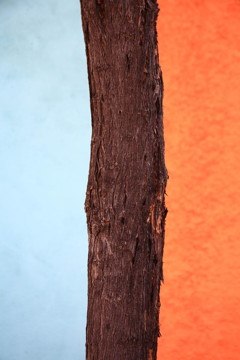 Download Free Stock HD Photo of tree over paint Online