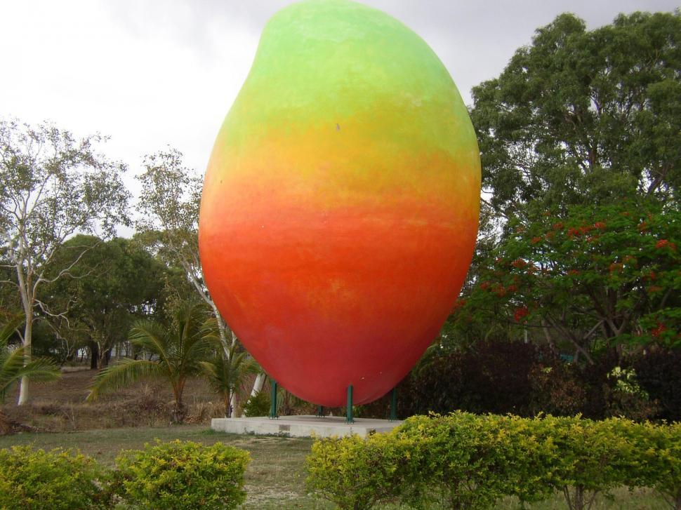 Download Free Stock Photo of Bowen Big Mango