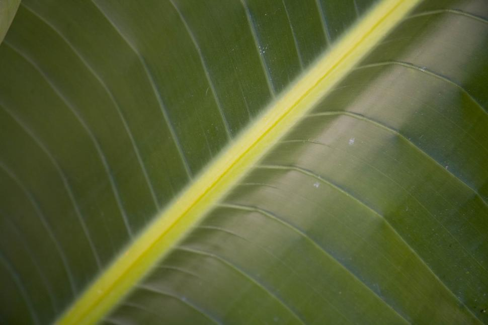 Download Free Stock HD Photo of Green Leaf Online