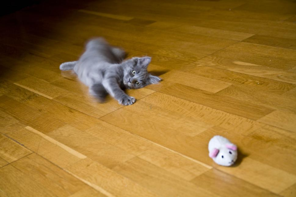 Download Free Stock HD Photo of Playful Cat Online