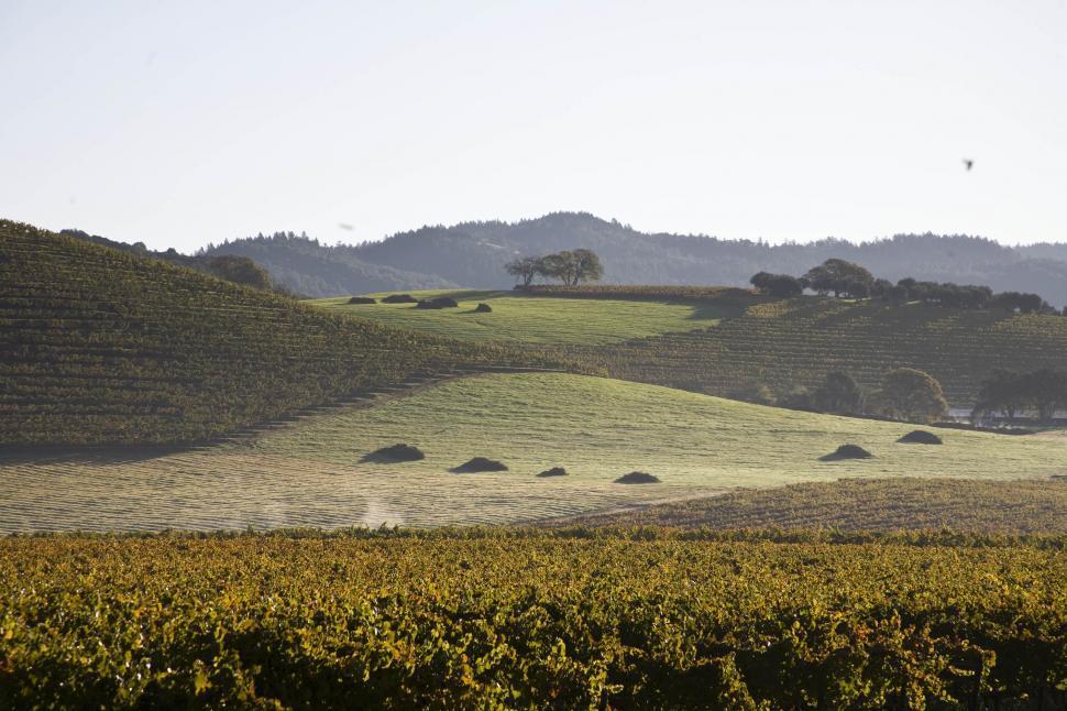 Download Free Stock Photo of Scenic Vineyard Landscape