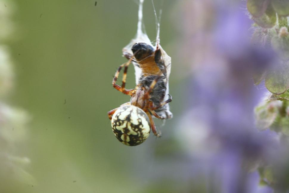 Download Free Stock HD Photo of predator spider Online