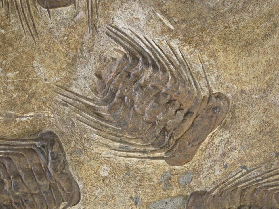 Download Free Stock HD Photo of fossils Online
