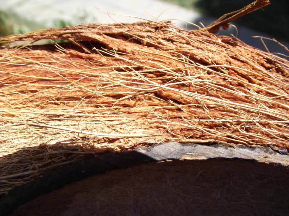 Download Free Stock Photo of Coconut hairs close up