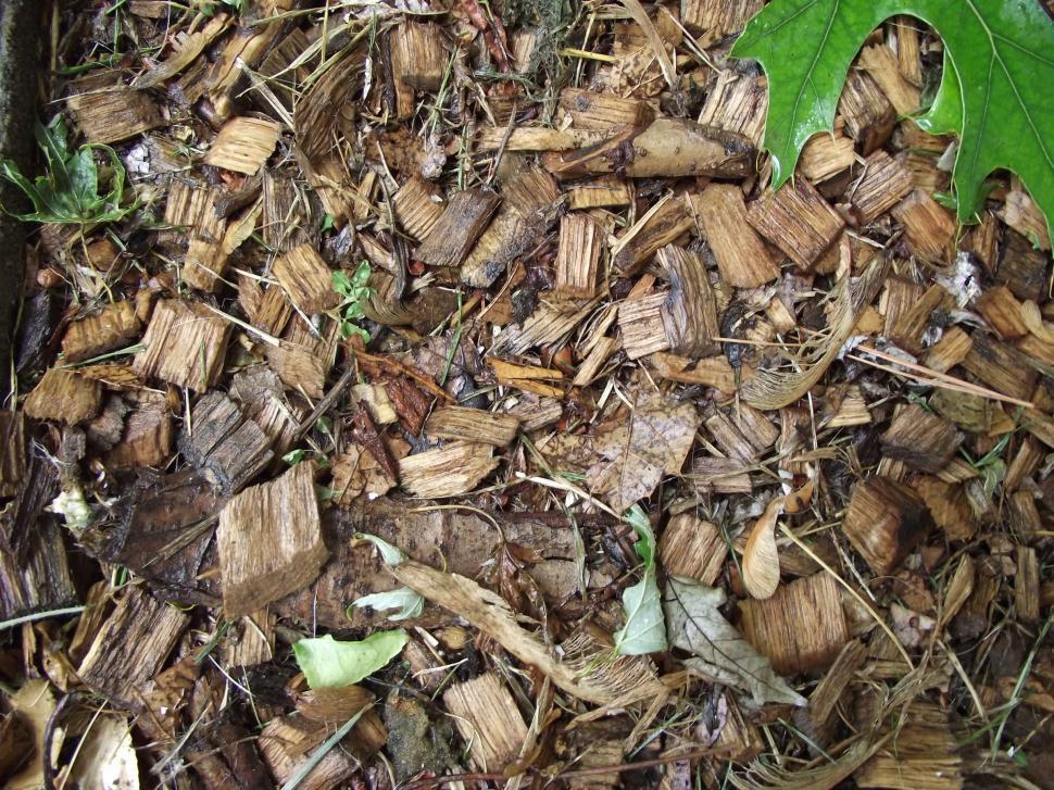 Download Free Stock Photo of Wet pine wood chips