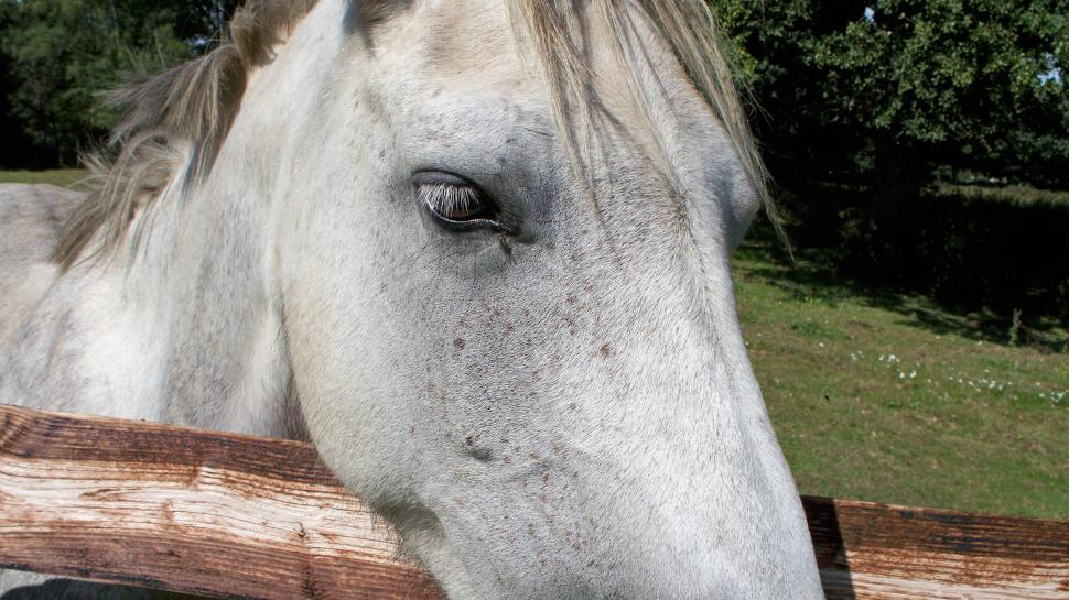 Download Free Stock HD Photo of Horse Eye Online