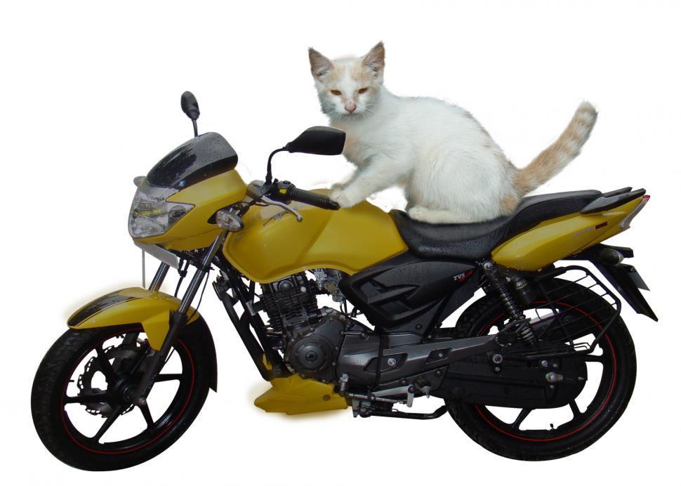 Download Free Stock HD Photo of Biker Cat Online