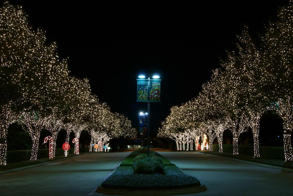 Download Free Stock Photo of Trees in Lights
