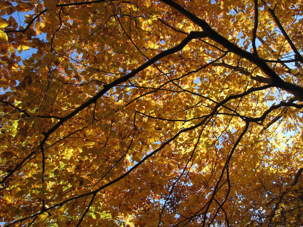 Download Free Stock Photo of Fall Branches