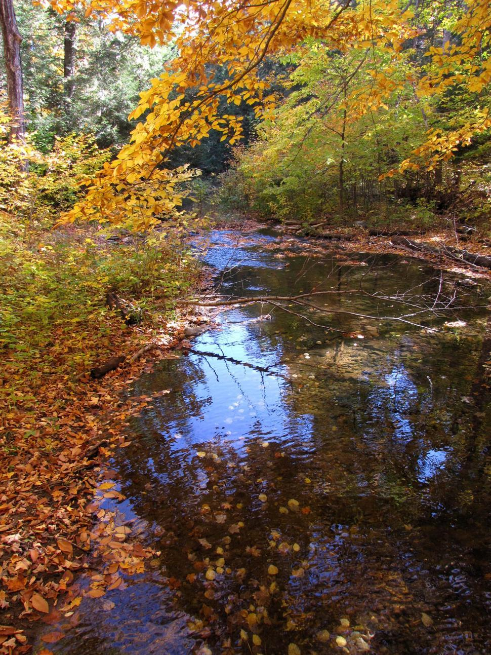 Download Free Stock Photo of Fall Stream
