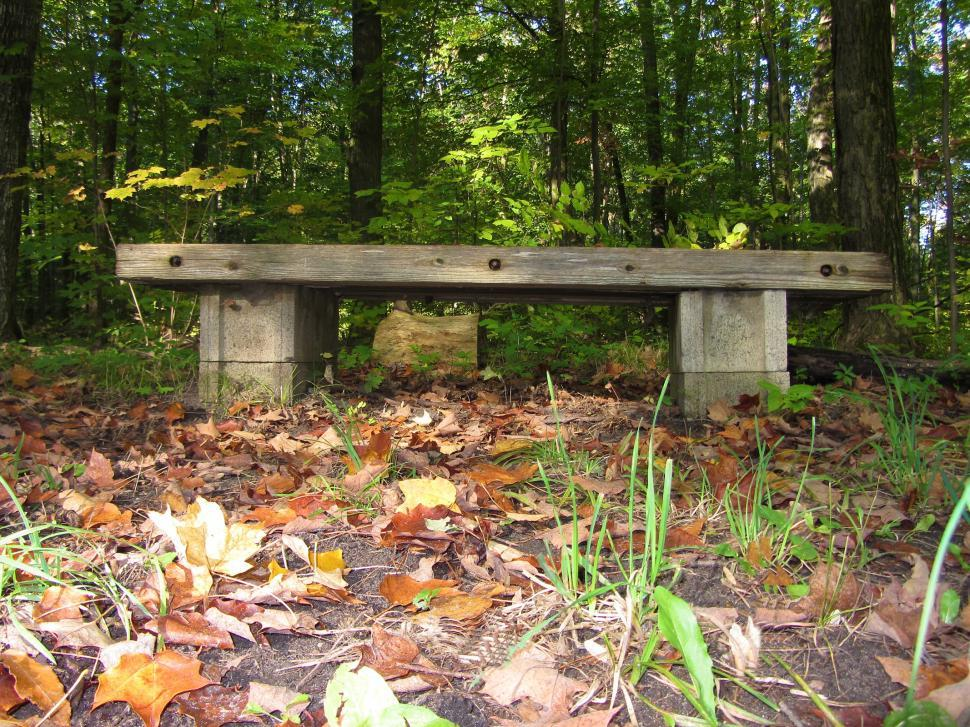 Download Free Stock HD Photo of Bench in the Woods Online
