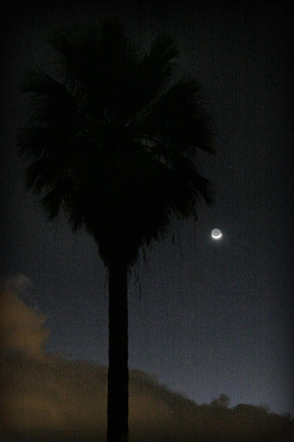 Download Free Stock Photo of Grainy dark palm and moon