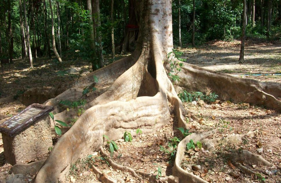 Download Free Stock HD Photo of Large Tree Roots Online