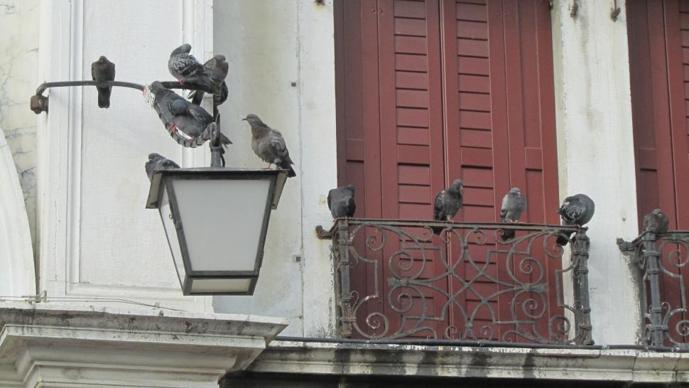 Download Free Stock HD Photo of Doves in Piazza San Marco Online