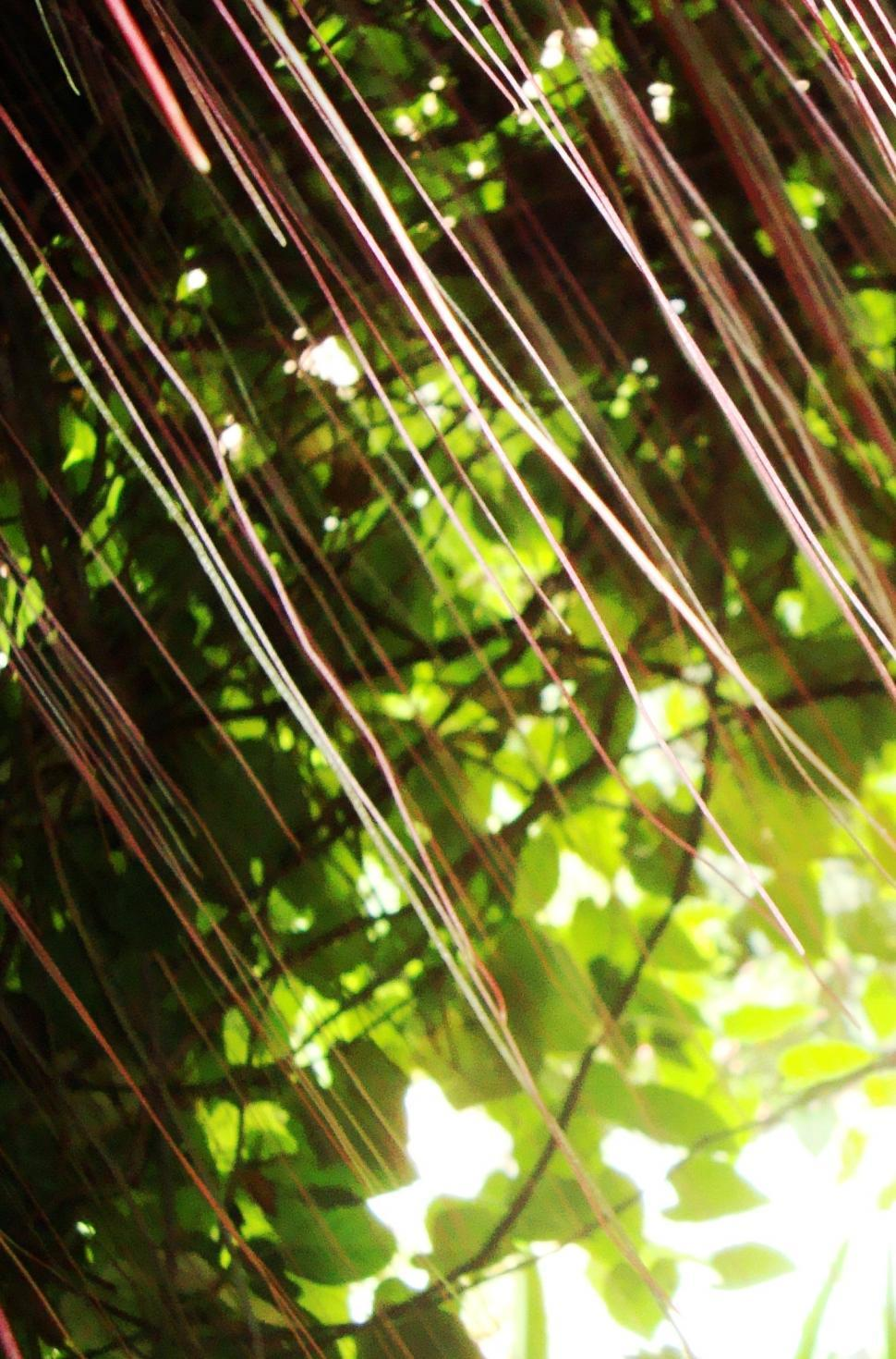 Download Free Stock Photo of Abstract Jungle Pattern