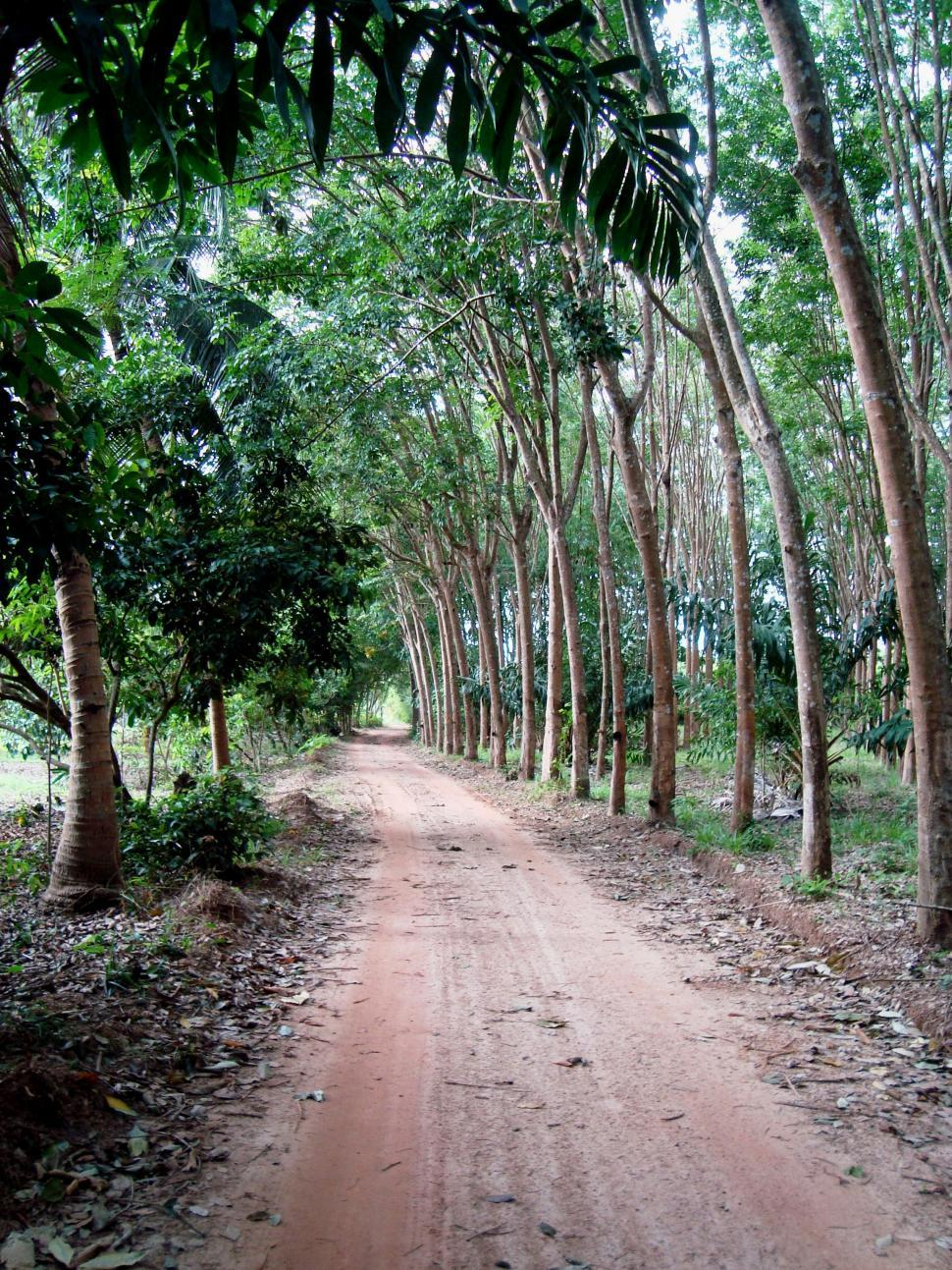 Download Free Stock HD Photo of Forest Dirt Road Online